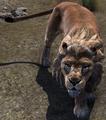 Lion (Elder Scrolls)