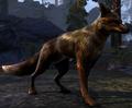 Fox (Elder Scrolls)