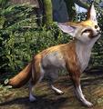 Fennec Fox (Elder Scrolls)