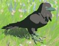 Mountain Crow