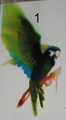 Martial Parrot