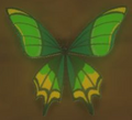 Thunderwing Butterfly