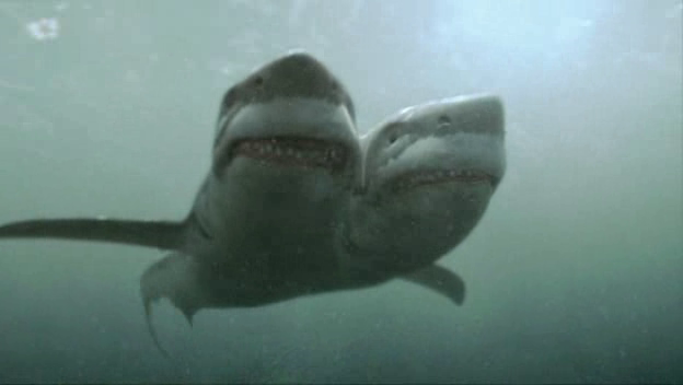 2 Headed Shark