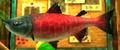 Postal Salmon