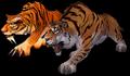 Tiger (World of Warcraft)