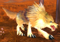 Coyote (World of Warcraft)