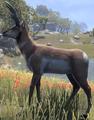 Antelope (Elder Scrolls)