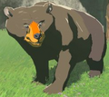 Honeyvore Bear