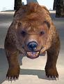 Bear (Elder Scrolls)