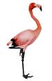 Flamingo (Guild Wars)