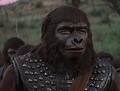 Aldo (Gorilla)