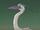 Heron (Amphibia)