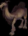 Camel (World of Warcraft)