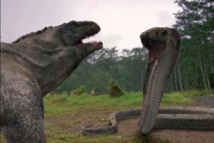 Cobra vs komodo