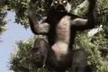 Zombie Lemur