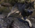 Dire Wolf (Elder Scrolls)