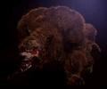 Bear Beast CGI