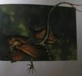 Novusaurus biscutica