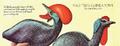 Flightless Guineafowl