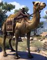 Camel (Elder Scrolls)