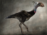 Terror Bird (10,000 B.C.)
