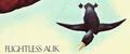 Flightless Auk