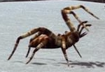 File:Ice Spider 1.png