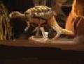 Turtleroo