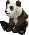 Panda (World of Warcraft)