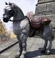 Horse (Elder Scrolls)