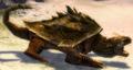 Bonesnap Turtle