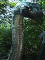 Python (Boa vs. Python)