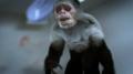 Zombified Monkey