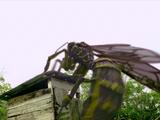 Dragon Wasp
