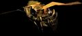Bee (Elder Scrolls)