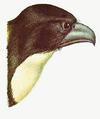 Hawk Whistler