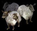 Sheep (World of Warcraft)