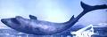 Ice Shark