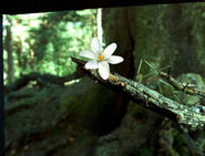 Fairyinsectflower
