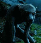 Werewolf-HarryPotter