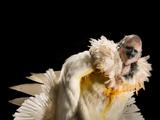 Cockatoo/Human Hybrid