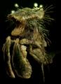 Bog Shrimp