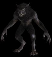 Werewolf (Elder Scrolls)