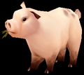 Pig (World of Warcraft)