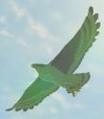 Islander Hawk
