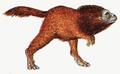 Raboon