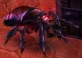 Beetle (World of Warcraft)