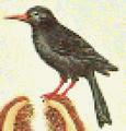 Tick Bird