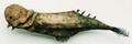 Parrotfish (Gensou Hyouhon Hakubutsukan)