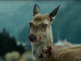 Undead Deer (Train to Busan)